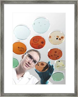 Microbiology Research Framed Print by Tek Image