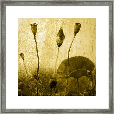 Poppy Art Image Framed Print by Falko Follert