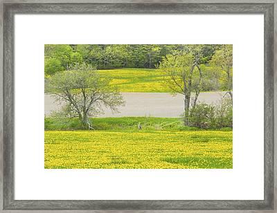 Spring Farm Landscape With Dandelion Bloom In Maine Framed Print