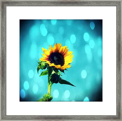 Sunflower Framed Print by Cathie Tyler