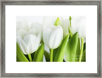 White Tulips Framed Print by Nailia Schwarz