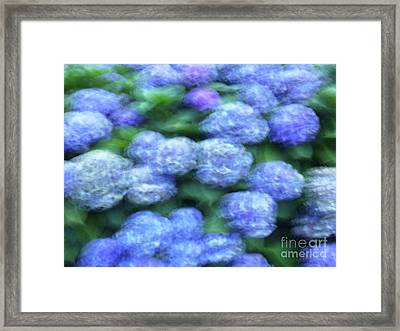 Flowers Framed Print by Marc Bittan