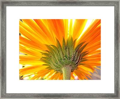 6008c Framed Print by Kimberlie Gerner