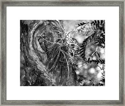 Centurions Of The Forest Series Framed Print