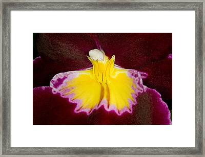 Exotic Orchids Of C Ribet Framed Print by C Ribet