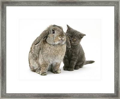 Kitten And Rabbit Framed Print
