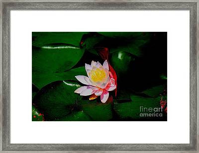 Black Water Framed Print by Allen Sindlinger