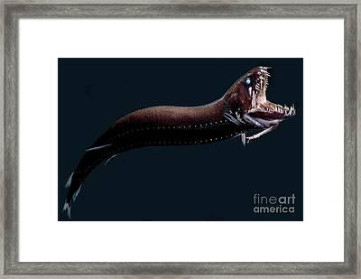 Deep-sea Dragonfish Framed Print by Dant� Fenolio