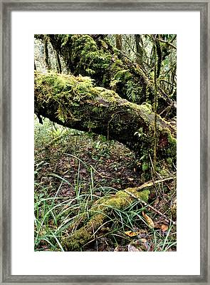 El Yunque National Forest Framed Print by Thomas R Fletcher