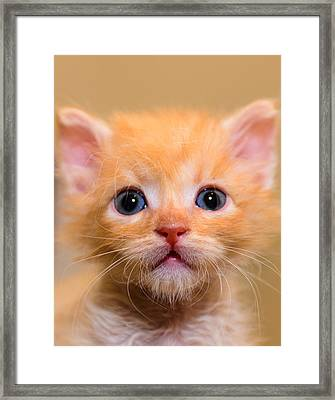 Kitty Framed Print