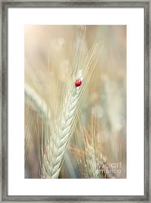 Ladybug On A Spike Framed Print
