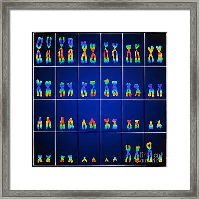 Male Karyotype Framed Print by Omikron