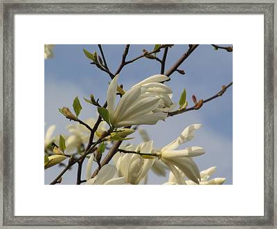 Opening Soon Framed Print by Alfred Ng