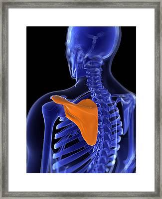 Shoulder Blade, Artwork Framed Print by Sciepro