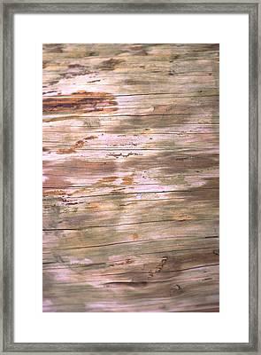 Tree Bark Framed Print