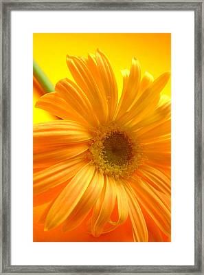 7321-007 Framed Print by Kimberlie Gerner