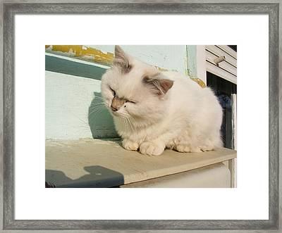 Framed Print featuring the photograph Cat by Bogdan Floridana Oana