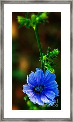 Flower Framed Print by Lenroy Johnson