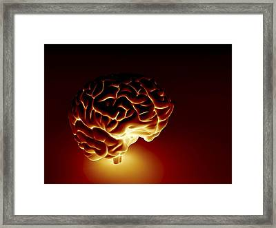 Human Brain, Artwork Framed Print by Pasieka