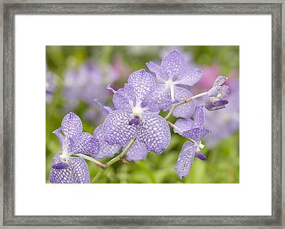 Framed Print featuring the photograph Orchid Flower Bloom by C Ribet
