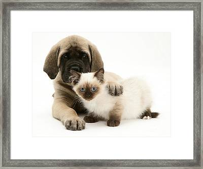 Puppy And Kitten Framed Print by Jane Burton