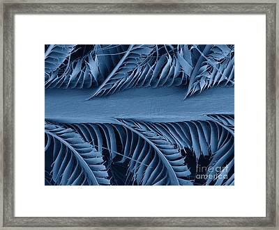 Sem Of Eastern Bluebird Feathers Framed Print by Ted Kinsman