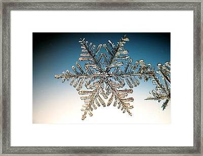 Snowflake Framed Print by Ted Kinsman