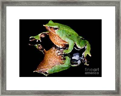 Darwins Frog Framed Print by Dant� Fenolio