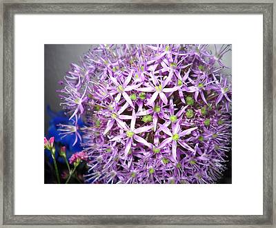 No Name Framed Print by Irina Zelichenko