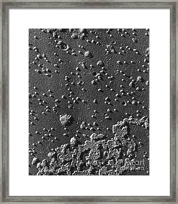 Polio Virus, Tem Framed Print