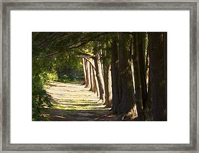 9am Sun Framed Print by Michel DesRoches