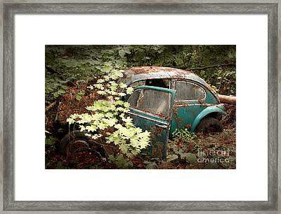 A '65 Bug In The Overgrowth Framed Print by Michael David Sorensen