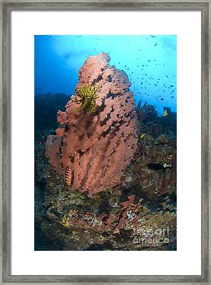 A Barrel Sponge With A Yellow Crinoid Framed Print