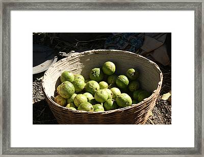 A Basket Full Of Guavas Just Outside Bhopal Framed Print