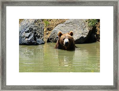 A Bear's Hot Tub Framed Print by Methune Hively