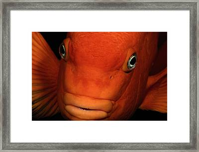 A Beautiful Close-up Photograph Framed Print by Wolcott Henry