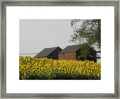 A Beautiful Country Setting In Ct Framed Print by Kim Galluzzo Wozniak