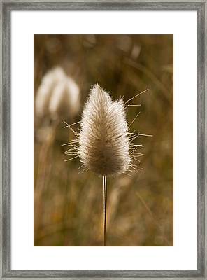 A Beautiful Seed Pod With Beautiful Sun Reflection Framed Print
