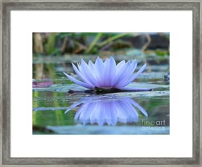 A Beautiful Water Lily Reflection Framed Print