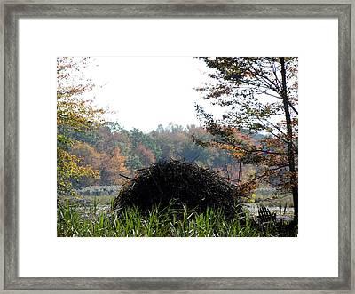A Beavers Home Framed Print by Kim Galluzzo Wozniak