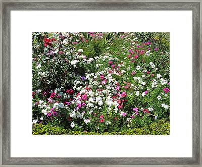 Framed Print featuring the photograph A Bed Of Beautiful Different Color Flowers by Ashish Agarwal