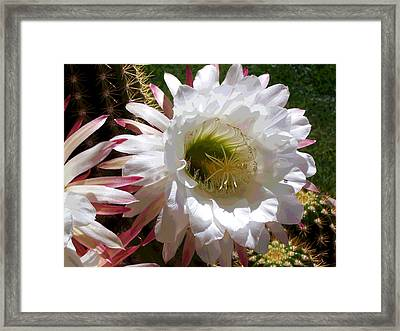 A Bees Beautiful World Framed Print