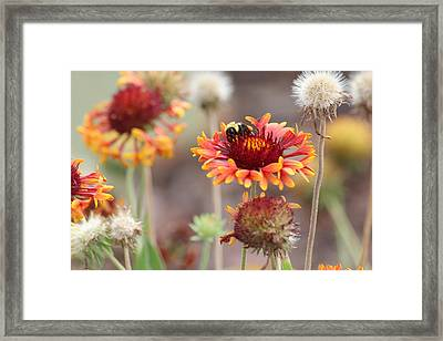 A Bee's Bliss Framed Print by Janet Mcconnell