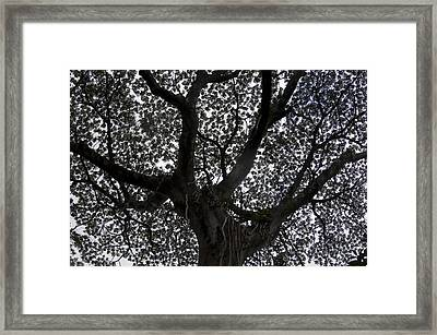 A Big Tree In The Rainforest Framed Print by Stacy Gold