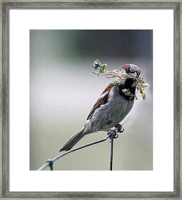 Framed Print featuring the photograph A Bird And A Twig by Elizabeth Winter