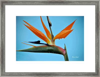 A Bird By The Pool Framed Print