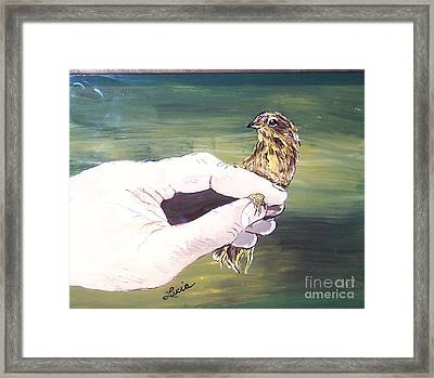 A Bird In Hand Framed Print