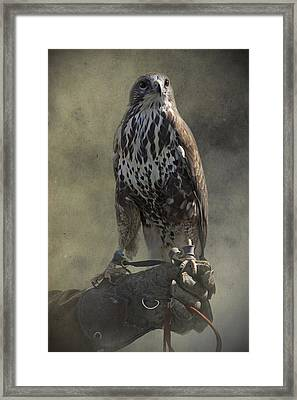 Framed Print featuring the photograph A Bird In The Hand by Ethiriel  Photography