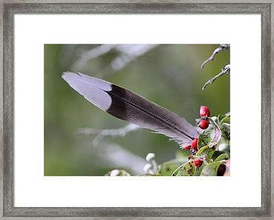 A Birds Christmas Framed Print by Travis Truelove
