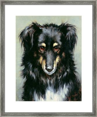 A Black And Tan Collie Framed Print